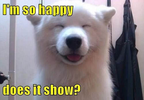 I'm so happy does it show? | cute white dog smiling with its eyes closed