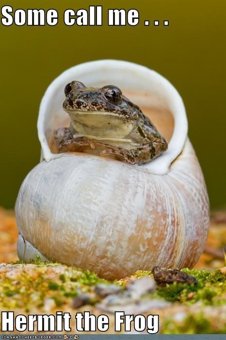 Some call me ... Hermit the frog   funny pic of a frog sitting in a seashell Kermit
