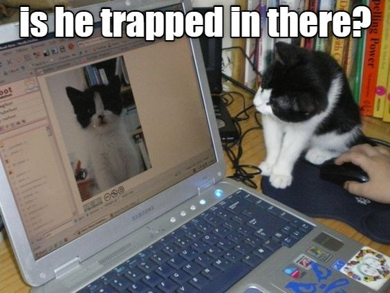he trapped in there? | pic of a cat looking at a laptop screen showing a photo of a kitten