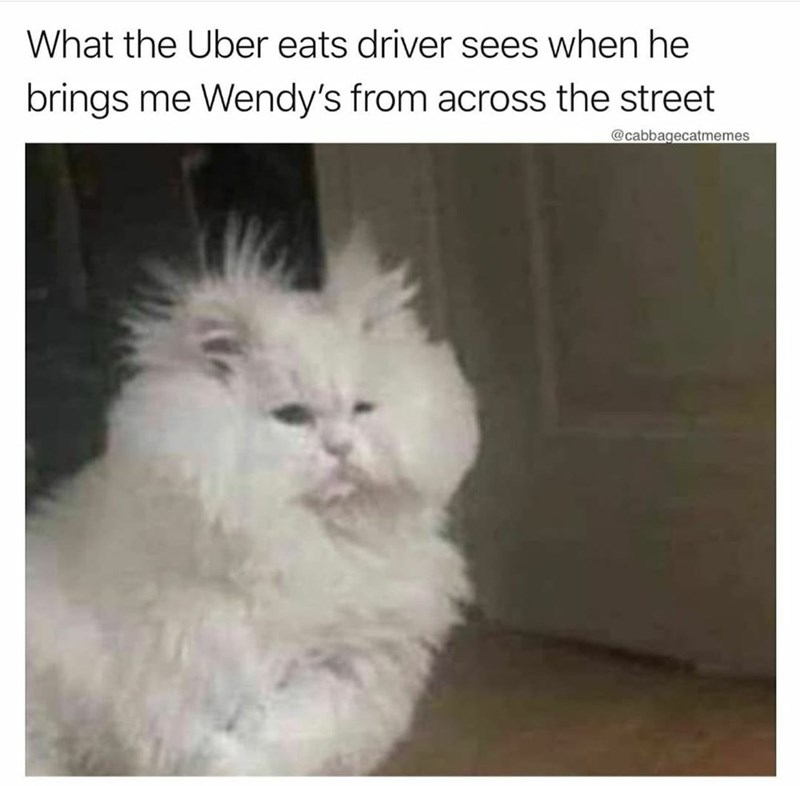 Cat - What the Uber eats driver sees when he brings me Wendy's from across the street @cabbagecatmemes