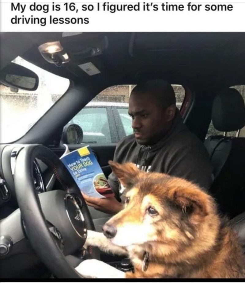 Car - My dog is 16, so I figured it's time for some driving lessons How to Teach YOUR DOG to Drive