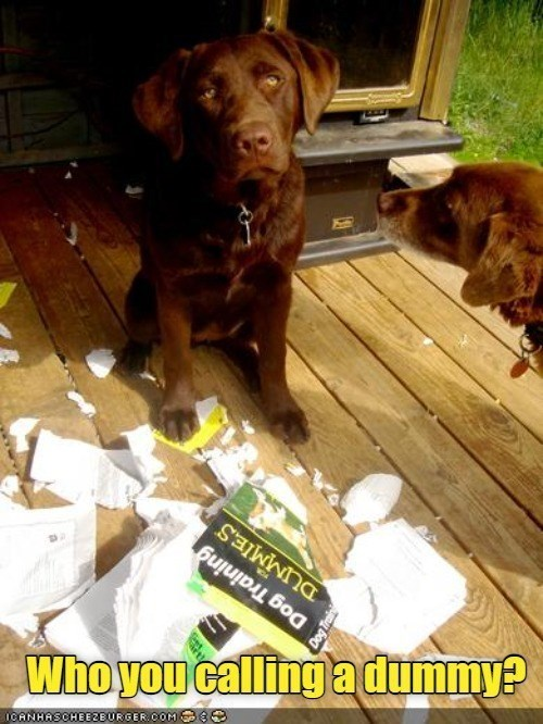 Who you calling a dummy | cute brown dog standing in the shredded remains of a book dog training for dummies