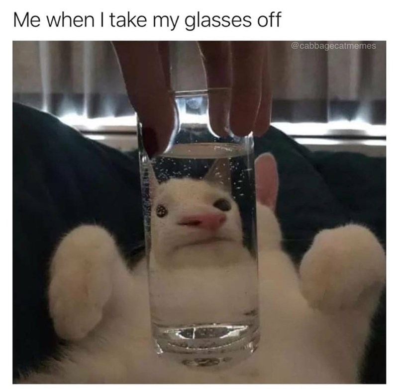 Vertebrate - Me when I take my glasses off @cabbagecatmemes