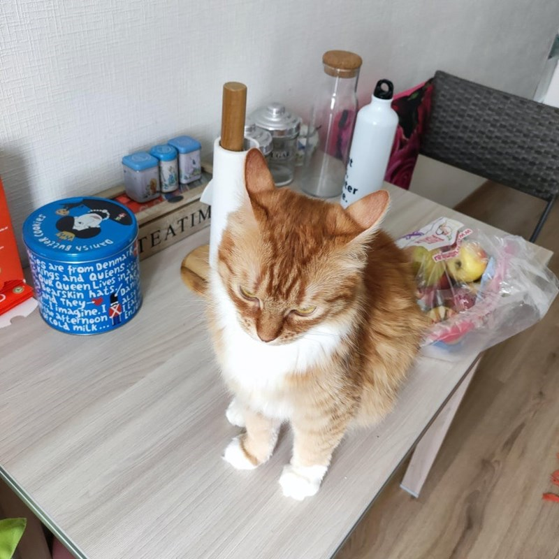 Cat - ter om DenmarkTEATIM from ings and QUEENS Ses are OUR QUeen Lives in earskin hatspan nd They ALS iemeon- COLA En/ ...