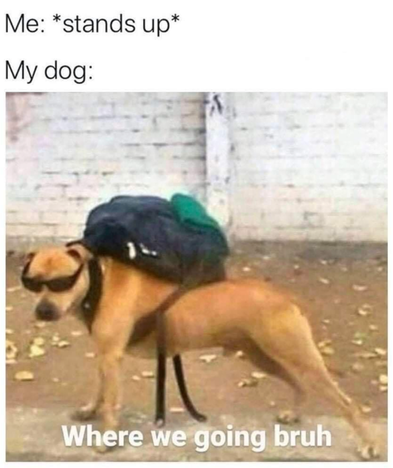 funny memes, memes, dog memes   Me: stands up My dog: Where we going bruh