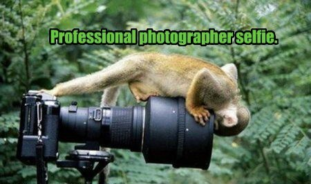 professional photographer selfie   funny pic of a small monkey climbing on a camera and looking at the lens
