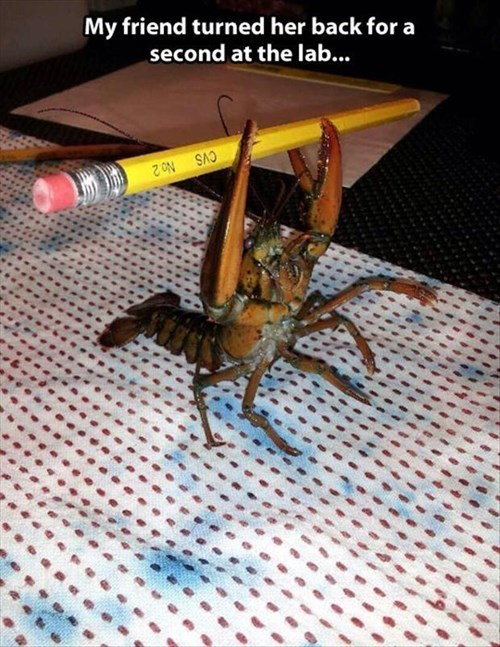 My friend turned her back for a second at the lab...   crab holding a pencil