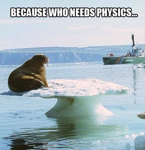 BECAUSE WHO NEEDS PHYSICS | walrus sitting on an iceberg