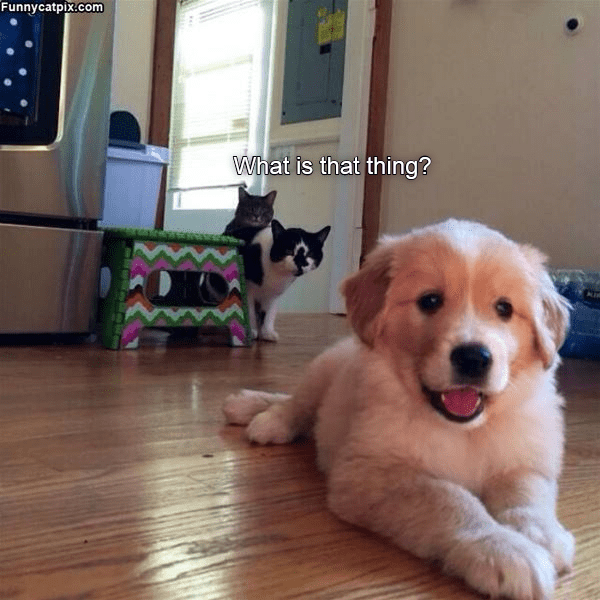 What is that thing | two cats watching a puppy from afar