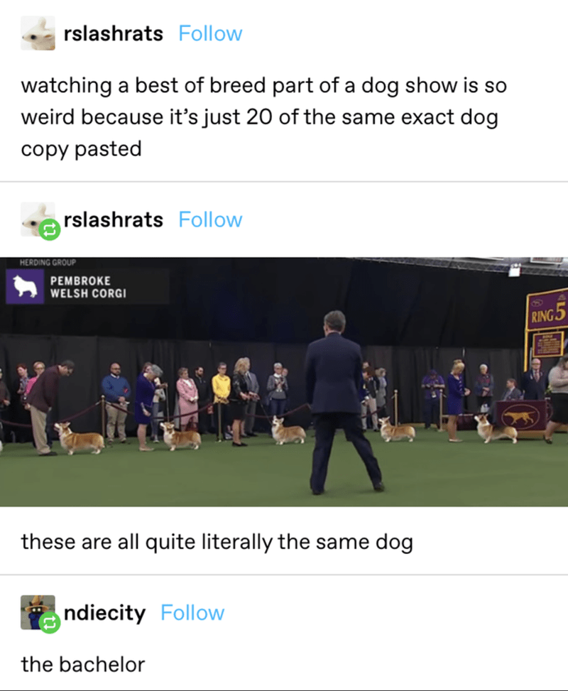 Product - rslashrats Follow watching a best of breed part of a dog show is so weird because it's just 20 of the same exact dog copy pasted rslashrats Follow HERDING GROUP PEMBROKE WELSH CORGI RING5 these are all quite literally the same dog ndiecity Follow the bachelor