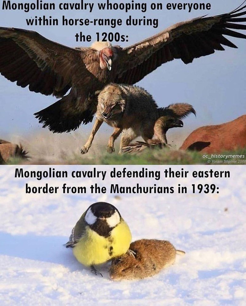 Bird - Mongolian cavalry whooping on everyone within horse-range during the 1200s: oc_historymemes O Yoram Shalrer 200s Mongolian cavalry defending their eastern border from the Manchurians in 1939: