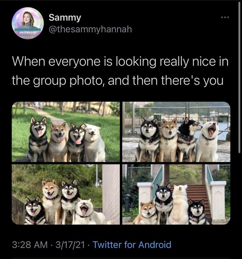 Photograph - Sammy ... MANTHA H HOW TO WIN LIFE @thesammyhannah ** When everyone is looking really nice in the group photo, and then there's you 3:28 AM · 3/17/21 · Twitter for Android