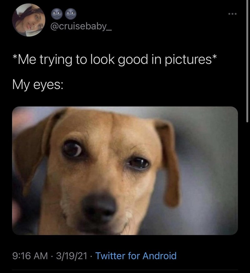 Dog - ... @cruisebaby_ *Me trying to look good in pictures* My eyes: 9:16 AM · 3/19/21 · Twitter for Android