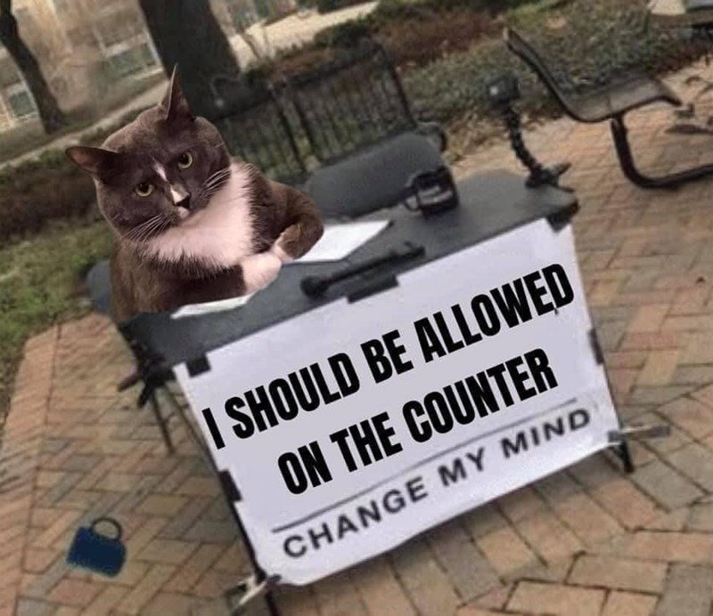 Cat - I SHOULD BE ALLOWED ON THE COUNTER CHANGE MY MIND