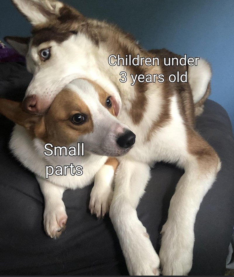 Dog - Children under 3 years old Small parts
