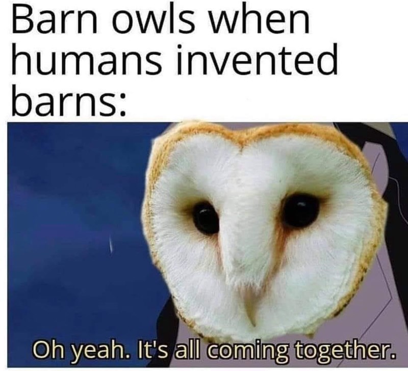 Nature - Barn owls when humans invented barns: Oh yeah. It's all coming together.
