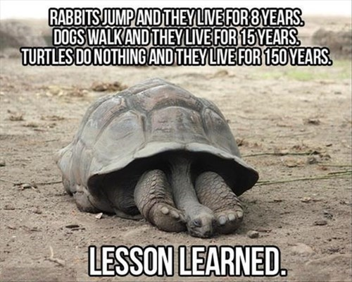 RABBITS JUMP AND THEY LIVE FOR 8 YEARS. DOGS WALK AND THEY LIVE FOR 15 YEARS TURTLES DO NOTHING AND LIVE FOR 150 YEARS. LESSON LEARNED