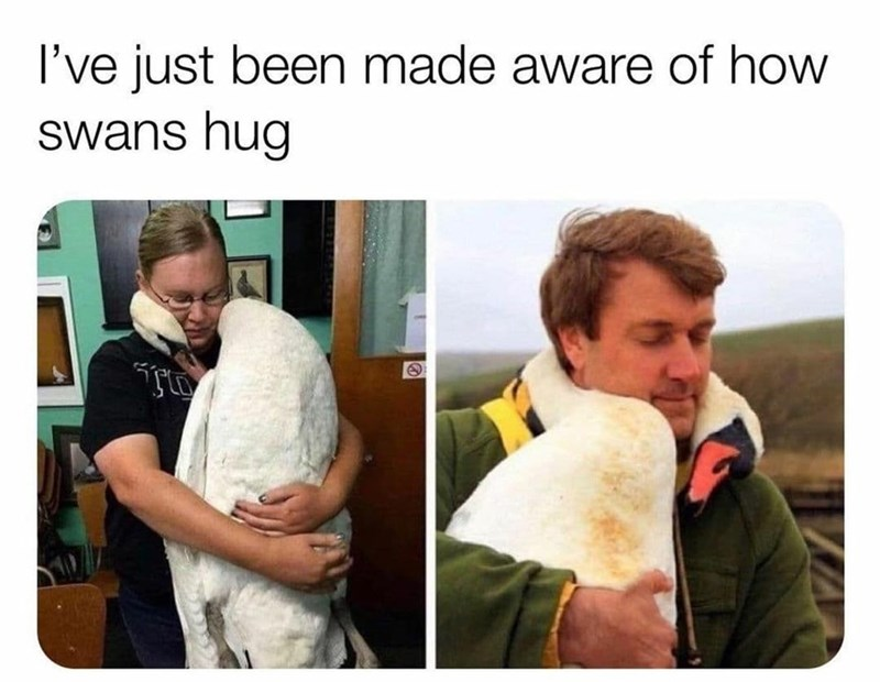 Outerwear - I've just been made aware of how swans hug