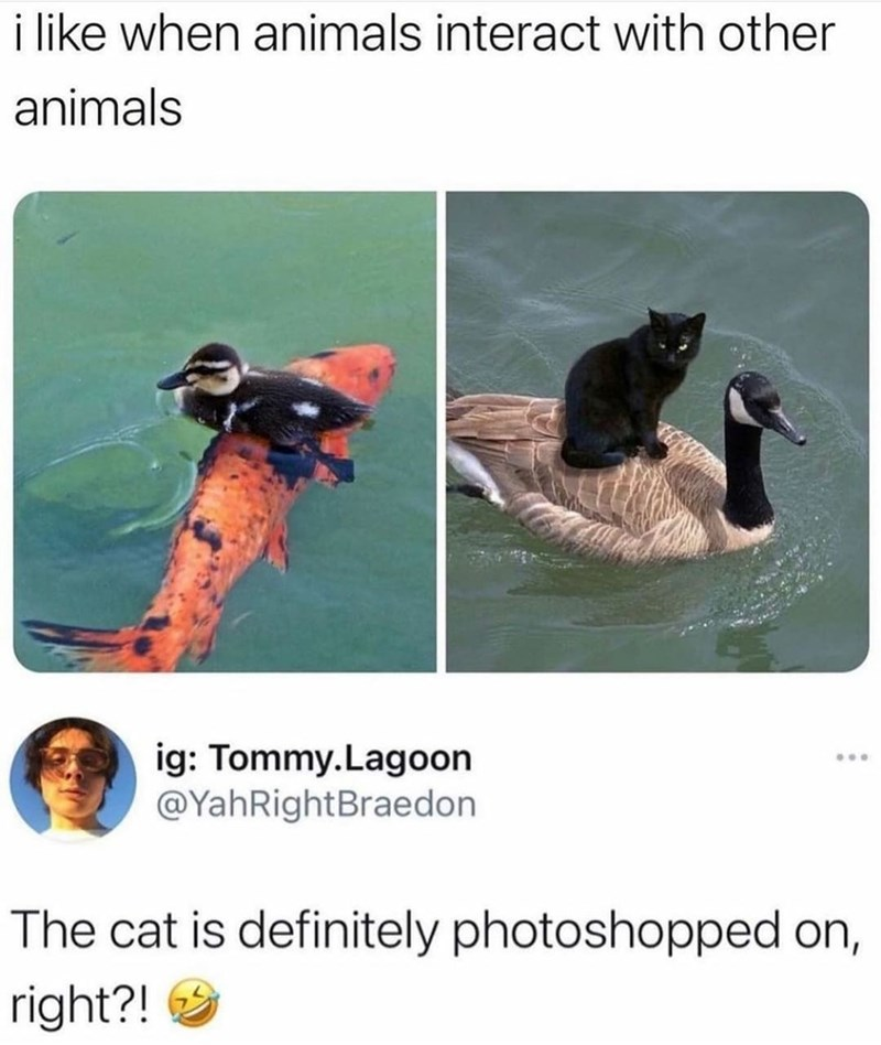Water - i like when animals interact with other animals ig: Tommy.Lagoon @YahRightBraedon ... The cat is definitely photoshopped on, right?!