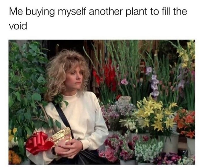 Flower - Me buying myself another plant to fill the void