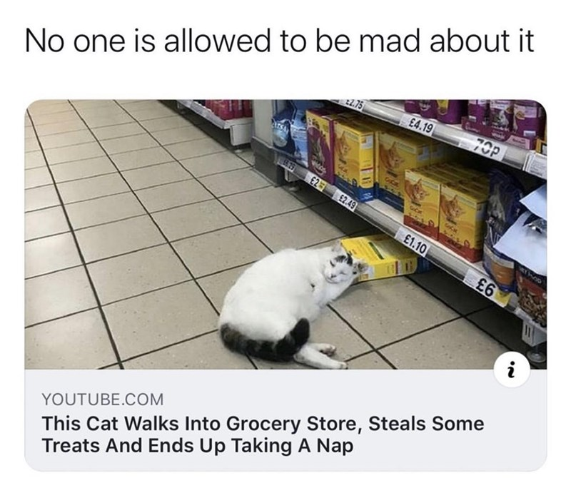 Cat - No one is allowed to be mad about it 70P 22.75 £4.19 GuCak 0479 E2 £2.49 £1.10 £6 i This Cat Walks Into Grocery Store, Steals Some Treats And Ends Up Taking A Nap YOUTUBE.COM