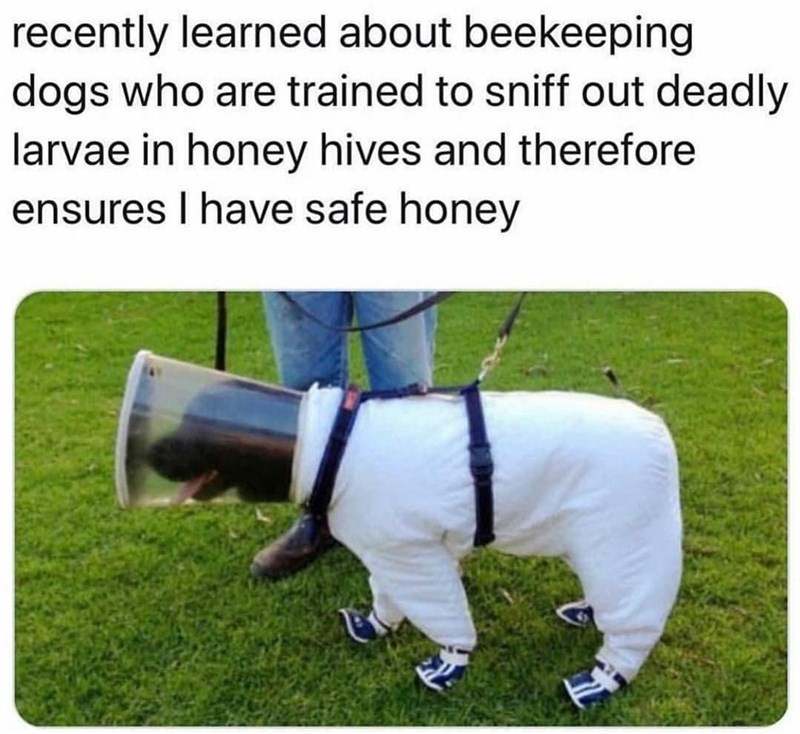 Dog - recently learned about beekeeping dogs who are trained to sniff out deadly larvae in honey hives and therefore ensures I have safe honey