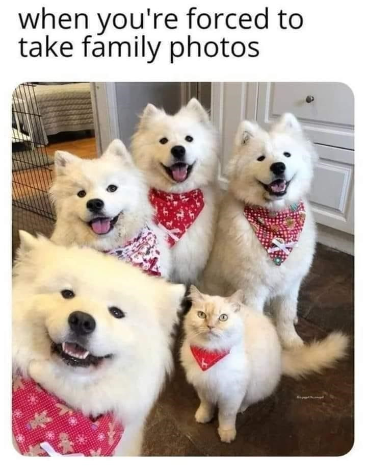 Dog - when you're forced to take fámily photos
