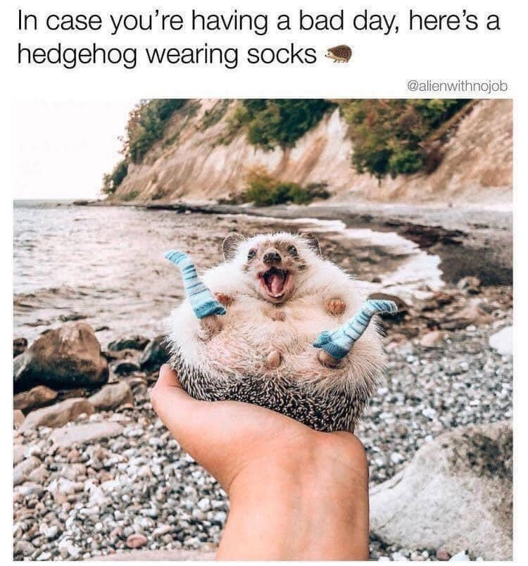 Water - In case you're having a bad day, here's a hedgehog wearing socks @alienwithnojob