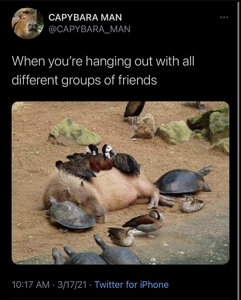 Ecoregion - CAPYBARA MAN @CAPYBARA_MAN When you're hanging out with al different groups of friends 10:17 AM · 3/17/21 · Twitter for iPhone