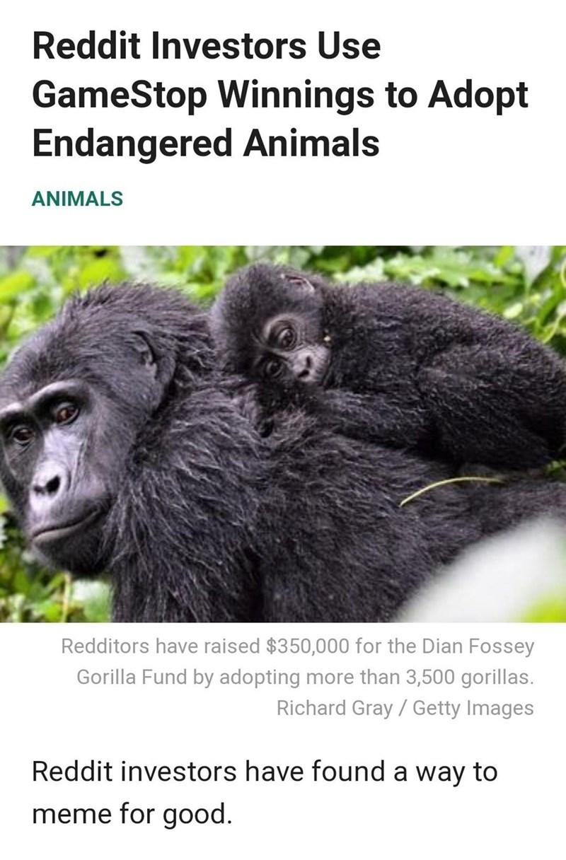 Primate - Reddit Investors Use GameStop Winnings to Adopt Endangered Animals ANIMALS Redditors have raised $350,000 for the Dian Fossey Gorilla Fund by adopting more than 3,500 gorillas. Richard Gray / Getty Images Reddit investors have found a way to meme for good.