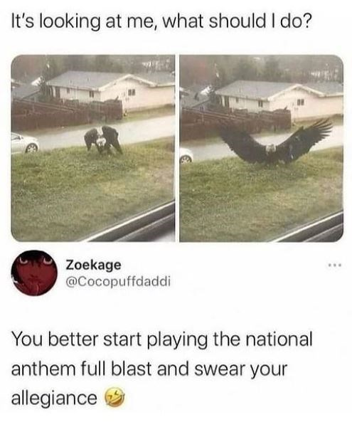 Ecoregion - It's looking at me, what should I do? Zoekage @Cocopuffdaddi You better start playing the national anthem full blast and swear your allegiance