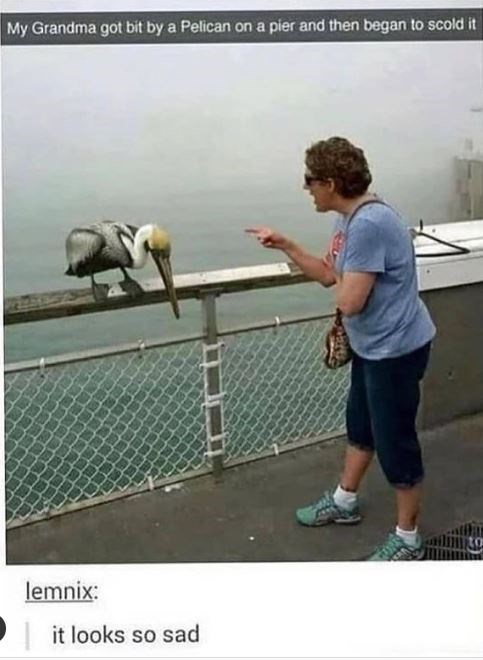 Water - My Grandma got bit by a Pelican on a pier and then began to scold it lemnix: it looks so sad