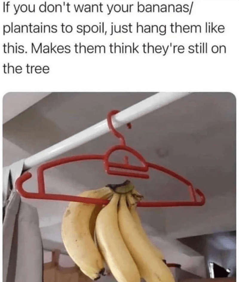 Food - If you don't want your bananas/ plantains to spoil, just hang them like this. Makes them think they're still on the tree