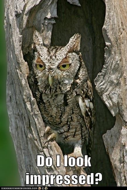 Do I look impressed? | funny pic of an owl with a serious expression