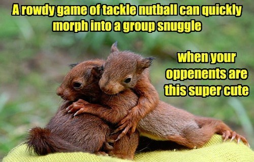 A rowdy game of tackle nutball can quickly morph into a group snuggle when your opponents are this super cute | adorable pic of two squirrels hugging