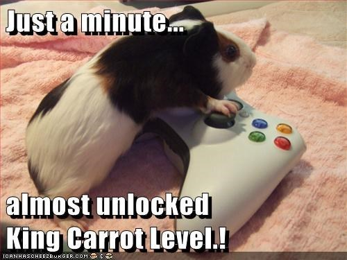 Just a minute almost unlocked King Carrot Level | cute pic of a guinea pig playing with an Xbox controller