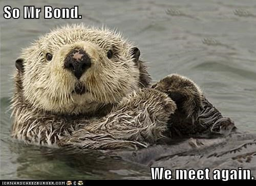 so mr. Bond we meet again | cute pic of an otter floating on its back with its paws together