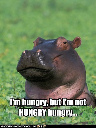 I'm hungry, but I'm not HUNGRY hungry | hypo hippopotamus