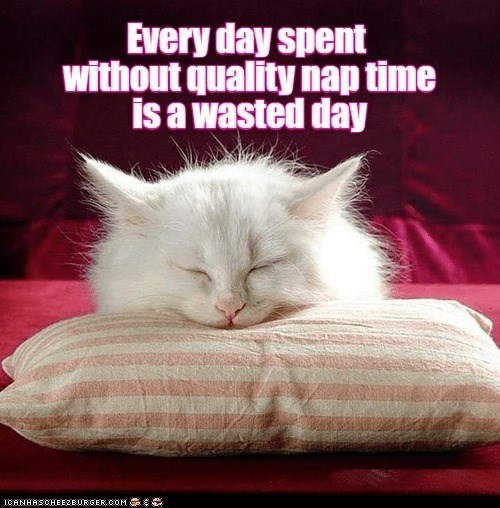 Every day spent without quality nap time is a wasted day | white cat sleeping on a pink pillow