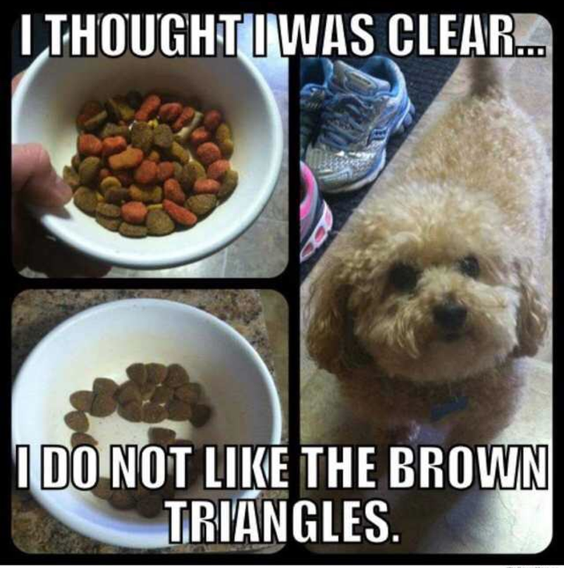 Dog - LTHOUGHTIWAS CLEAR. IDO NOT LIKE THE BROWN TRIANGLES.
