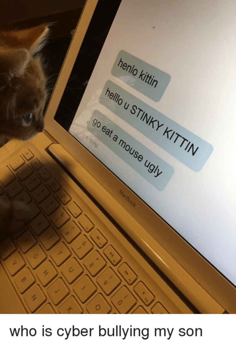 Computer - henlo kittin hello u STINKY KITTIN go eat a mouse ugly 4.18 PM MacBook 2455 1 17 80 who is cyber bullying my son Y. U