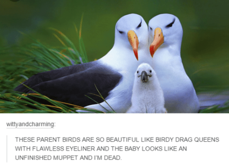 Bird - wittyandcharming: THESE PARENT BIRDS ARE SO BEAUTIFUL LIKE BIRDY DRAG QUEENS WITH FLAWLESS EYELINER AND THE BABY LOOKS LIKE AN UNFINISHED MUPPET AND I'M DEAD.