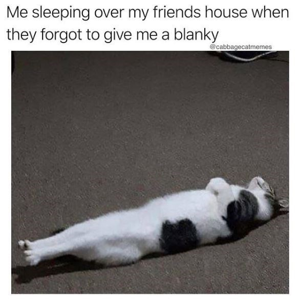 Cat - Me sleeping over my friends house when they forgot to give me a blanky @cabbagecatmemes