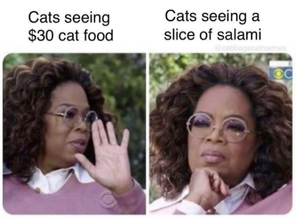 Forehead - Cats seeing a Cats seeing $30 cat food slice of salami cabbagecatmemes