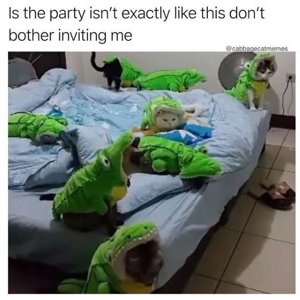 Vertebrate - Is the party isn't exactly like this don't bother inviting me @cabbagecatmemes