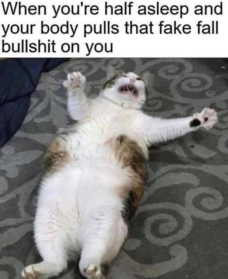 Cat - When you're half asleep and your body pulls that fake fall bullshit on you