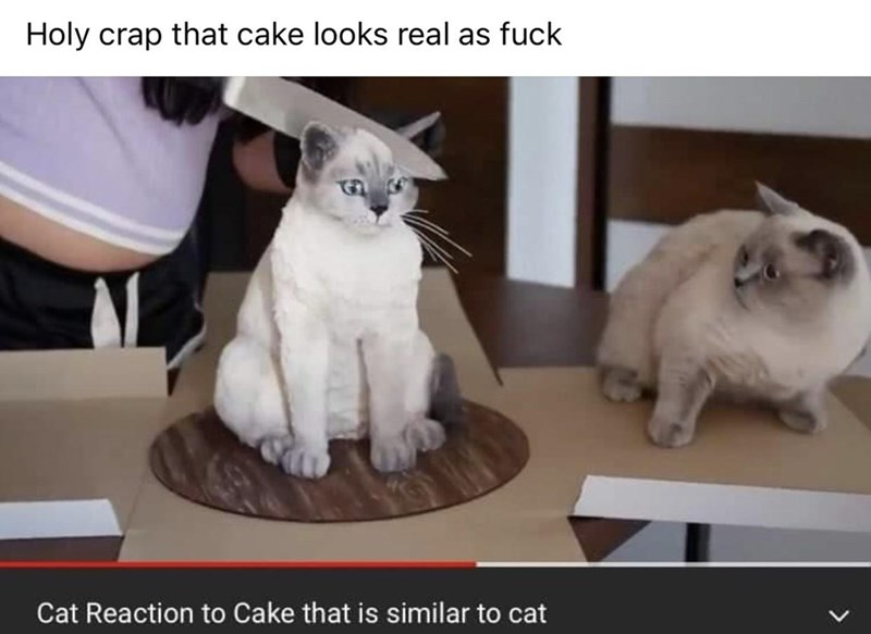 Cat - Holy crap that cake looks real as fuck Cat Reaction to Cake that is similar to cat