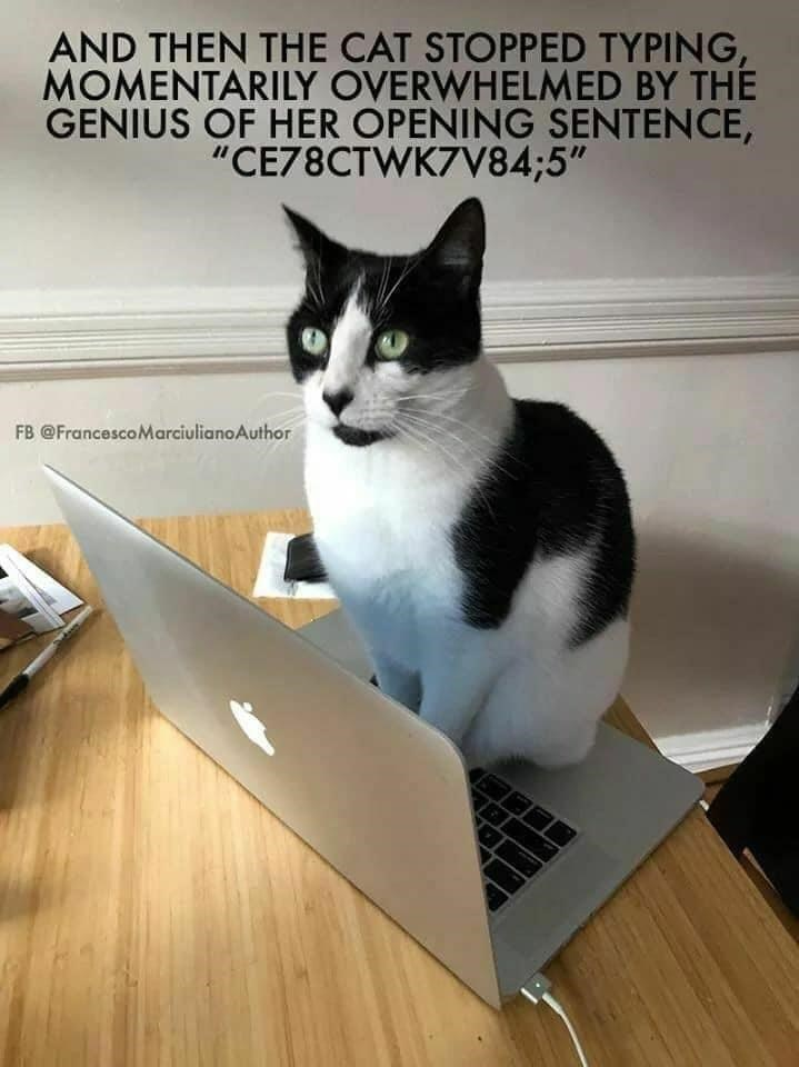 "Computer - AND THEN THE CAT STOPPED TYPING, MOMENTARILY OVERWHELMED BY THE GENIUS OF HER OPENING SENTENCE, ""CE78CTWK7V84;5"" FB @FrancescoMarciulianoAuthor"