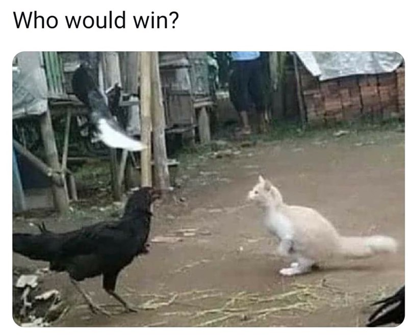 Bird - Who would win?