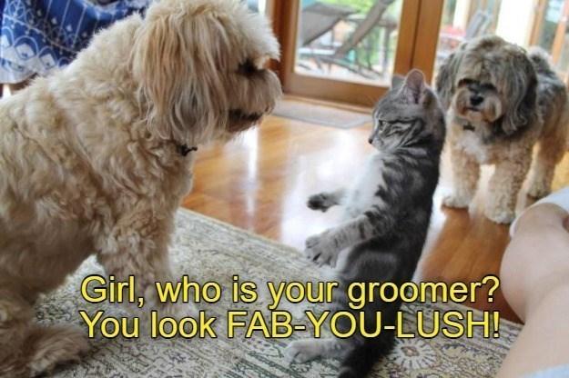 dog memes cat memes - 9601603328